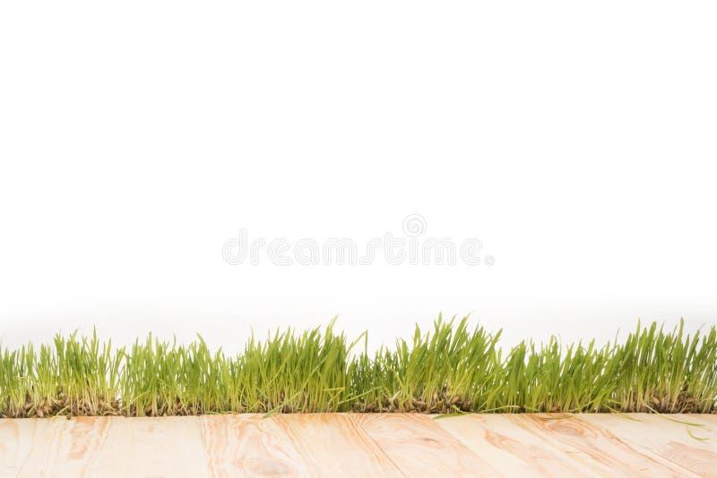 полная рамка деревянных планок и предпосылки sward, стоковое изображение rf