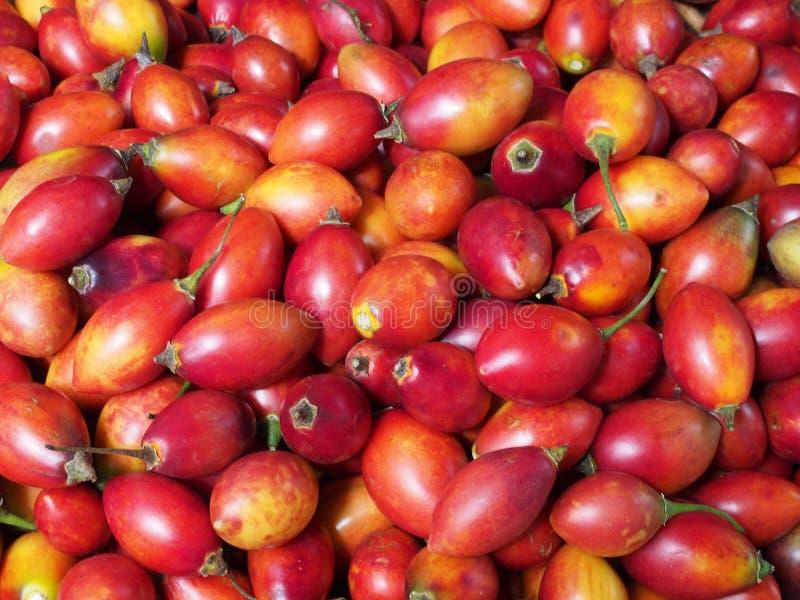 Полное изображение рамки плода эфиопского aethiopicumalso Solanum баклажана знает как nakati для продажи на стойле рынка стоковая фотография rf