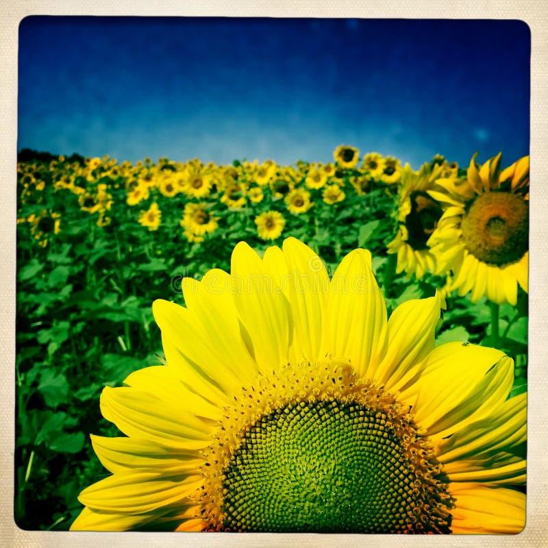 Полное солнце стоковые изображения
