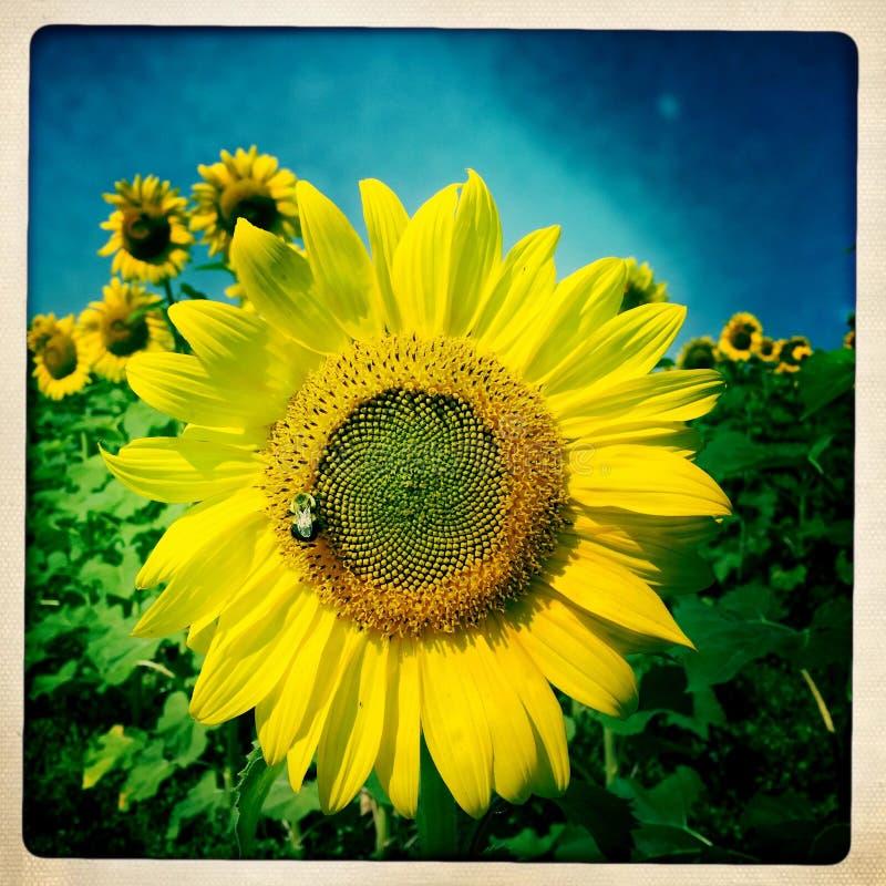 Полное солнце стоковое изображение rf