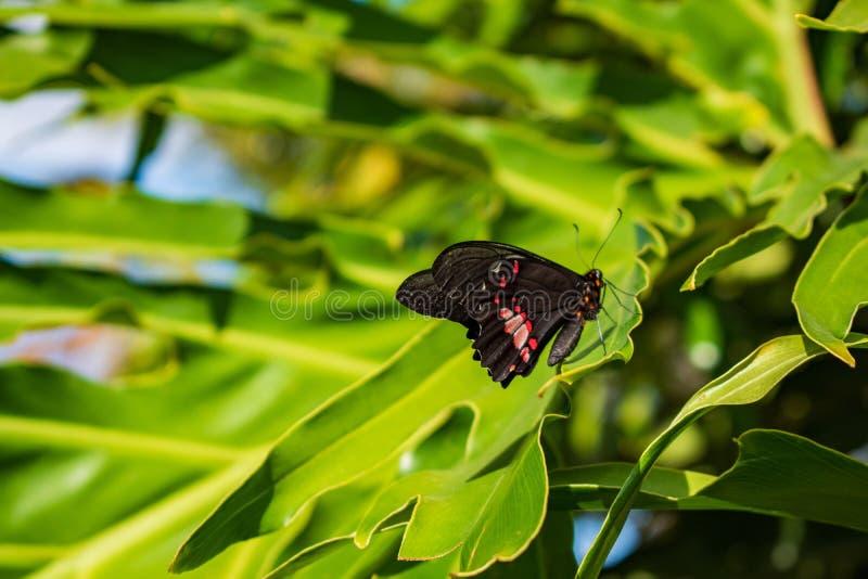 Бабочка в зеленых лист стоковые фотографии rf