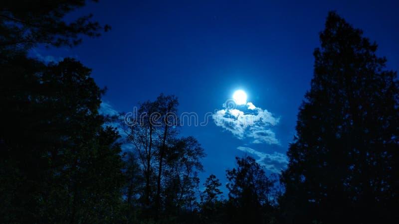 Полнолуние ночное небо стоковая фотография rf