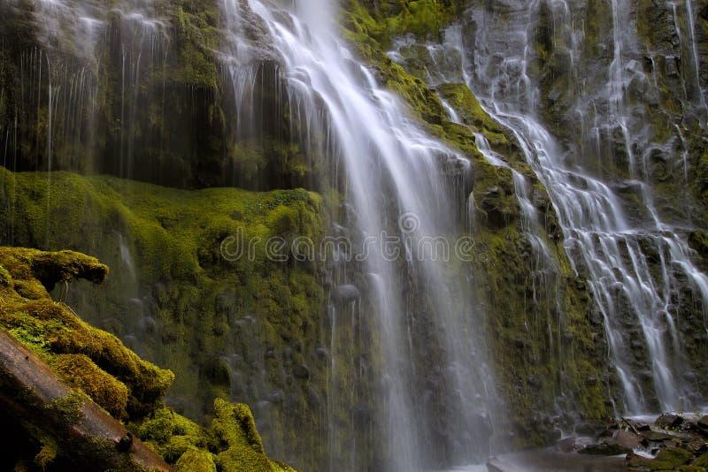 Полномочие понижается крупный план в Орегоне стоковое фото