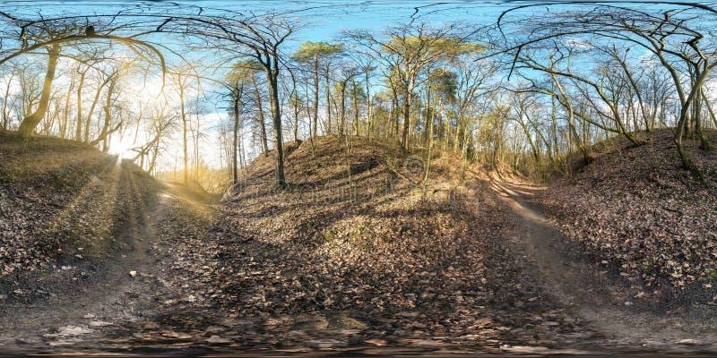 Полностью безшовная сферически панорама 360 градусов взгляда угла в покрытой дерев промоине в лесе с проекцией лучей солнца equir стоковая фотография rf