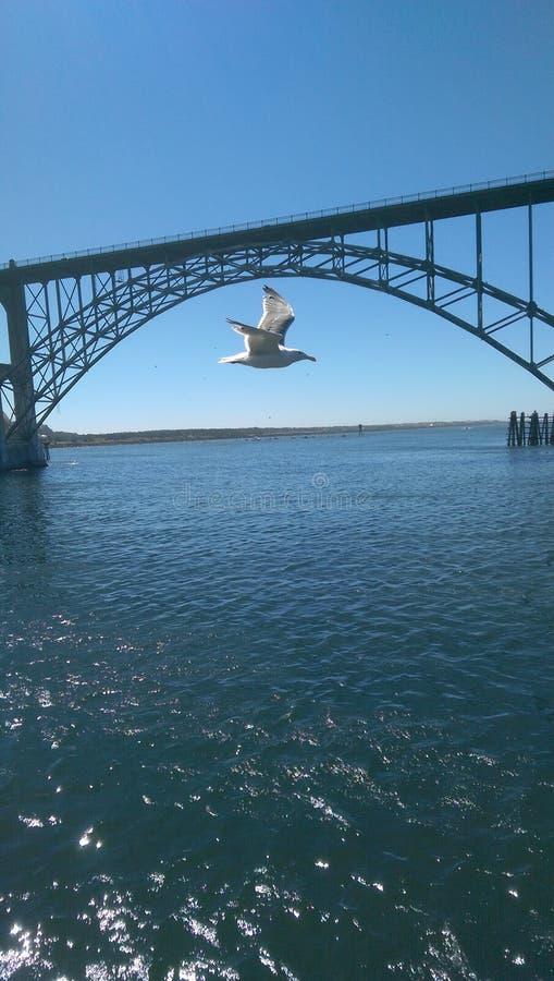Полный мост стоковые изображения