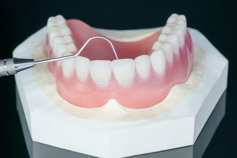 Полный denture или полный denture стоковые изображения