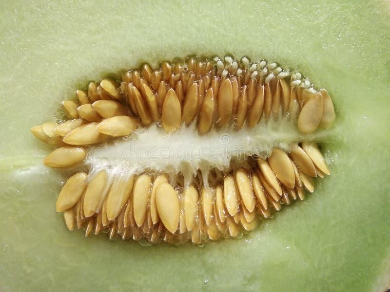 Половина дыни с семенами лежит на таблице, отрезала цвет дыни белый зеленый  плоды и ягоды лета заставка стоковое фото rf
