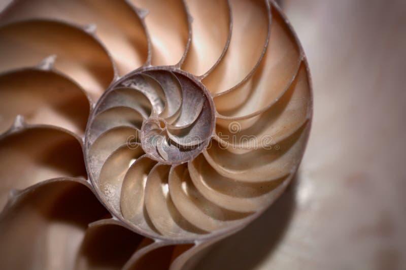Половинная раковина nautilus в коричневых и желтых тонах sepia в мягком fo стоковые изображения