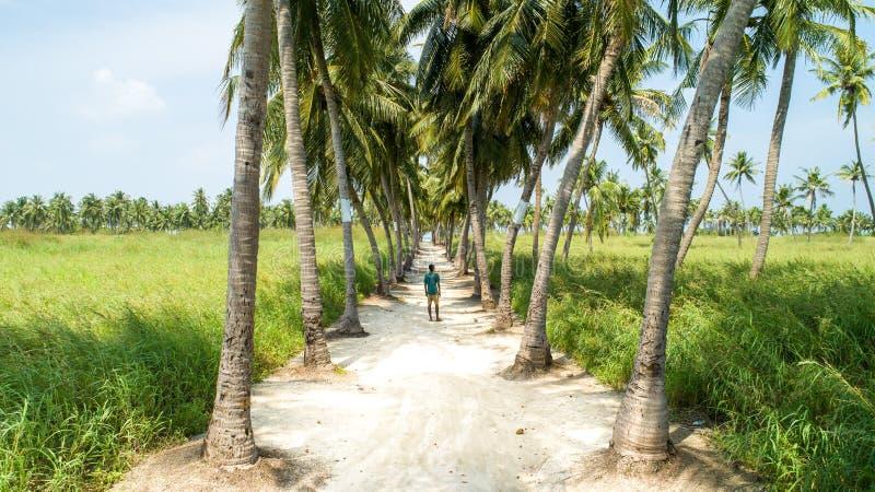 Положение молодого человека в середине песочной дороги с пальмами на обеих сторонах стоковые изображения