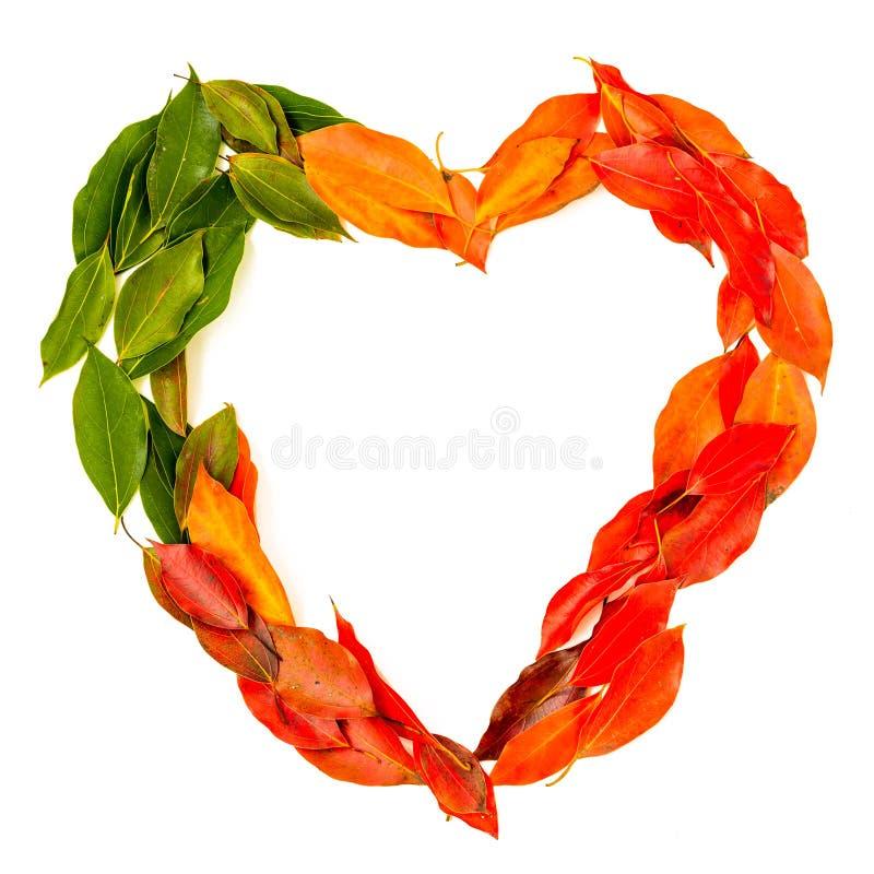 Положение падения осени плоское, расположение взгляда сверху, красочные листья осени в форме сердца на белой предпосылке стоковые изображения