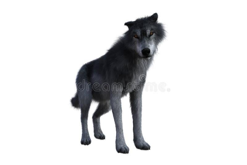 Положение серого волка стоковое изображение rf
