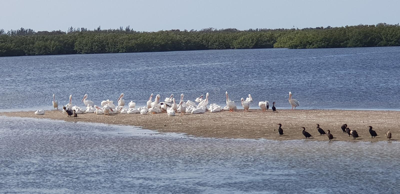 Положение солнечности Флориды острова Sanibel стоковая фотография