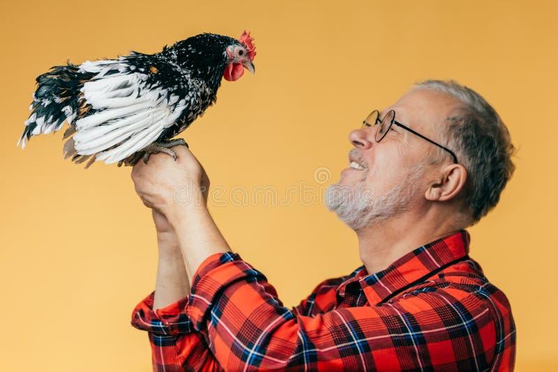 Положительный седой ученый studing курица стоковое фото rf