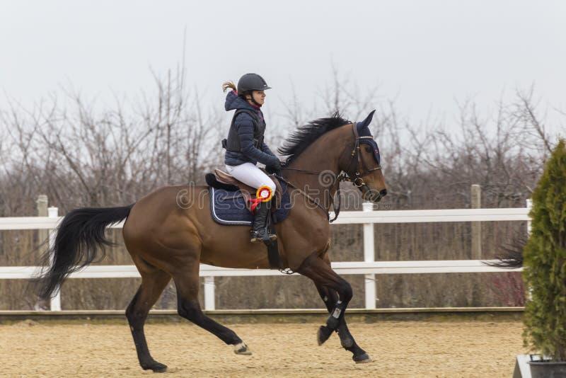 Полоса препятствий и parkour лошади стоковое изображение