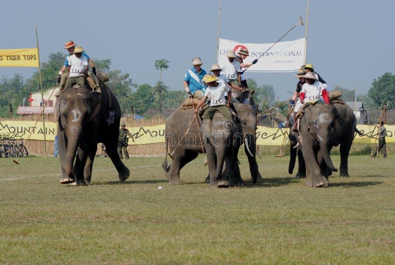 поло слона стоковые фото