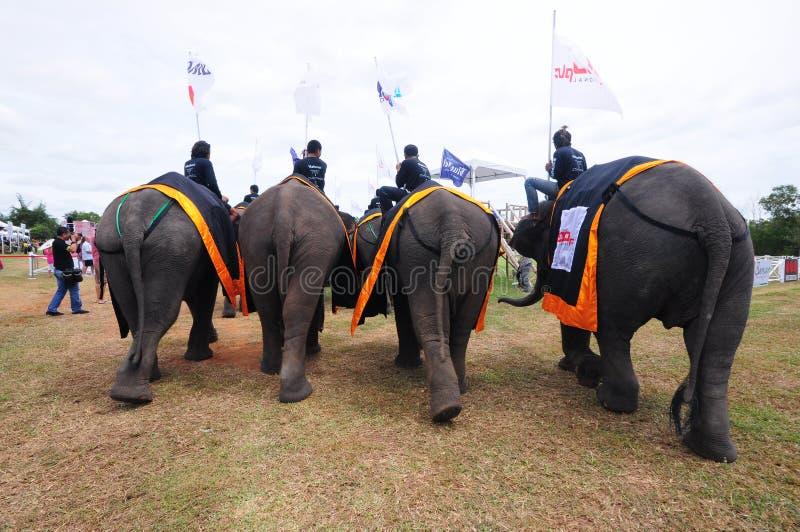 Поло слона стоковое изображение
