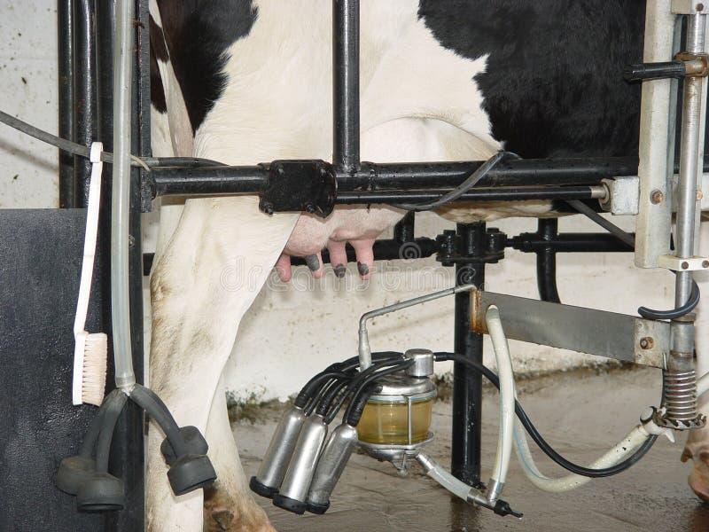 полученное молоко стоковое изображение