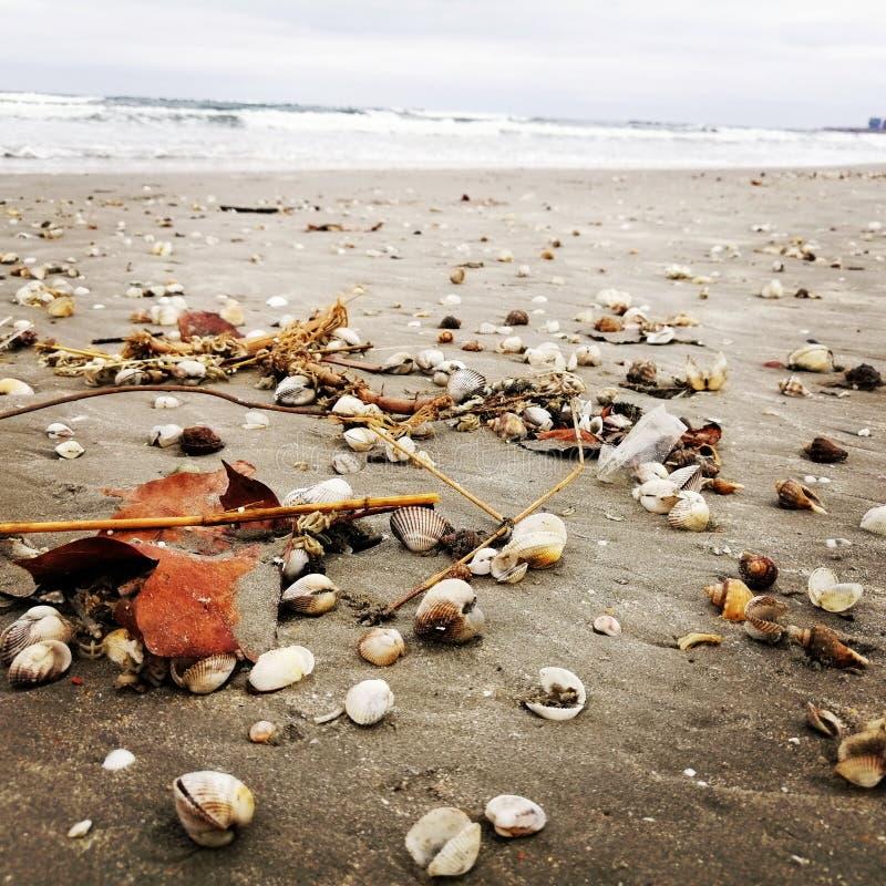 Получившиеся отказ раковины на пляже стоковое изображение rf