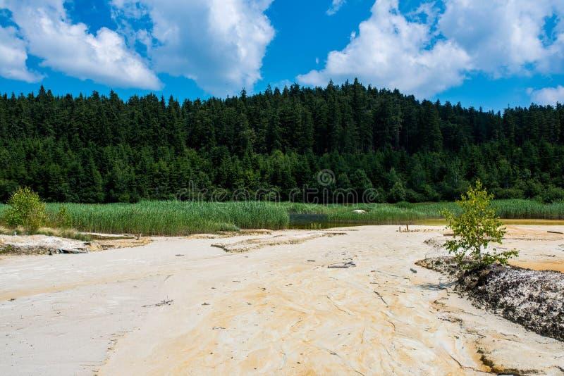 Получившийся отказ карьер каолина около соснового леса с грязным загрязнятьым озером стоковые изображения