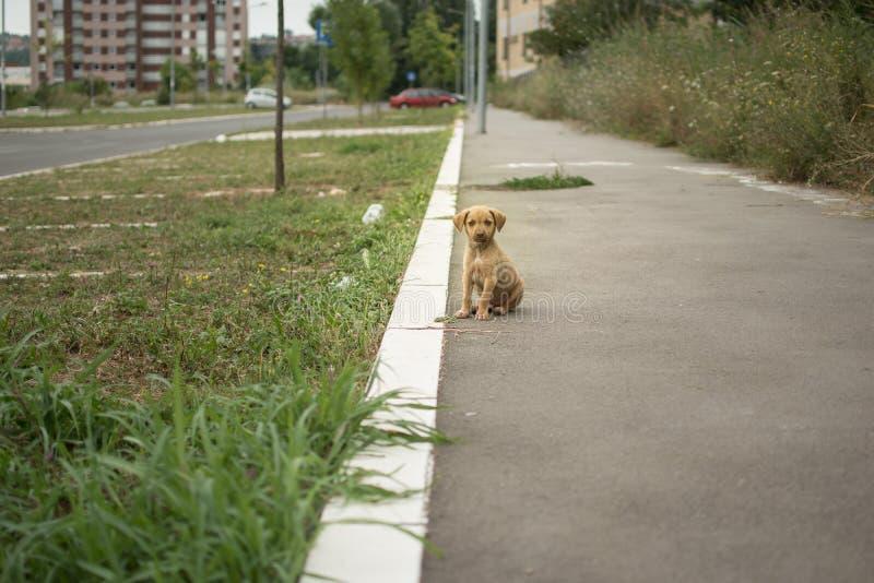 Получившийся отказ щенок сидя на мостовой стоковое изображение rf