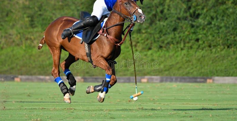 Польза игрока поло лошади мушкел ударила шарик стоковая фотография rf
