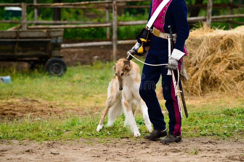 Польская собака борзой стоковые изображения rf