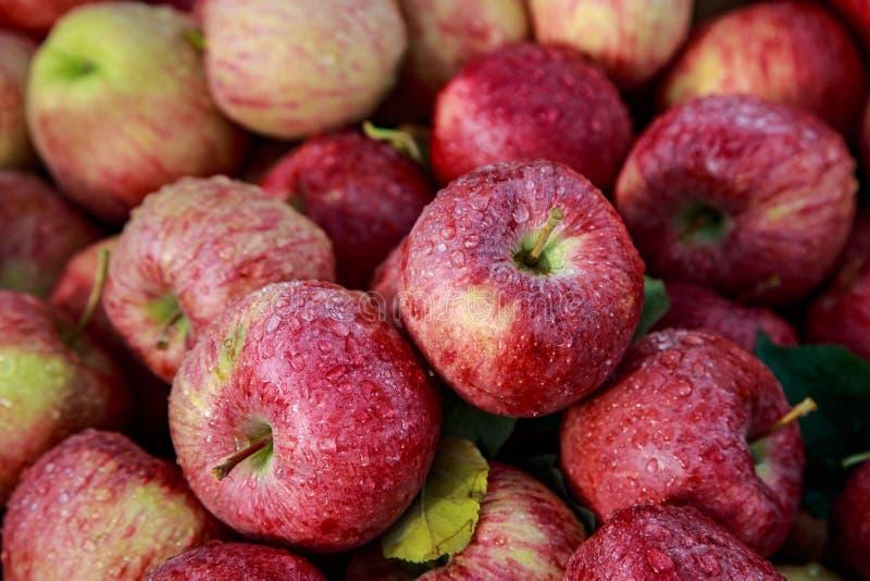 Полюбите свежими зрелыми дожди ` s Вашингтона помытые яблоками по своей природе стоковые фото