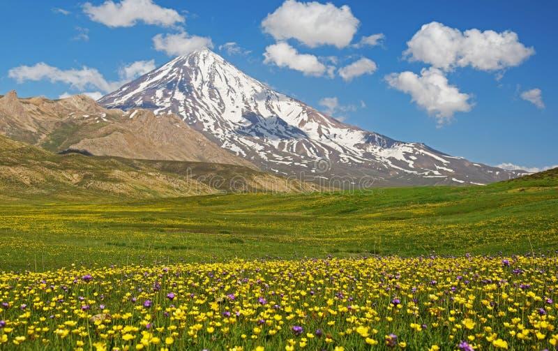 Поля горы и цветка Damavand стоковые изображения rf