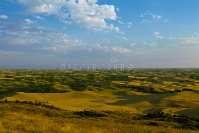 Поля завальцовки зерна от Butte Steptoe стоковые изображения