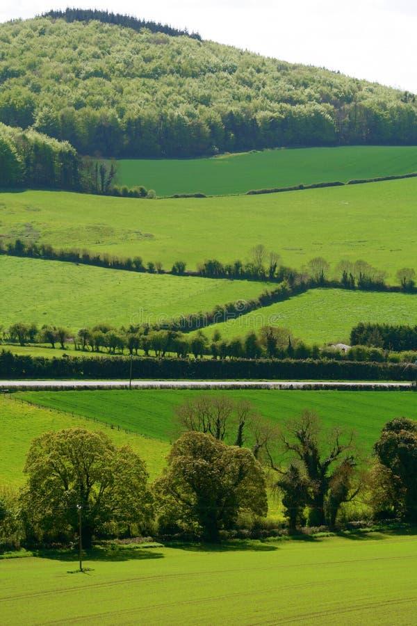 поля зеленая Ирландия стоковые фото