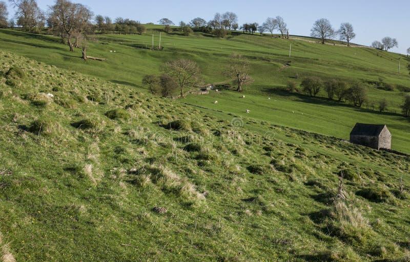 Поля, зеленые луга и деревья, пиковый район, Англия, Великобритания стоковое изображение