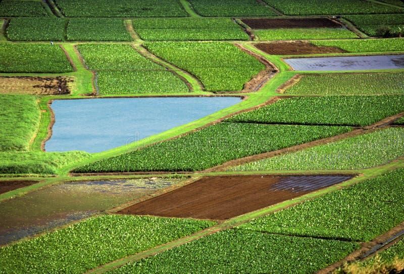 поля земледелия стоковая фотография rf