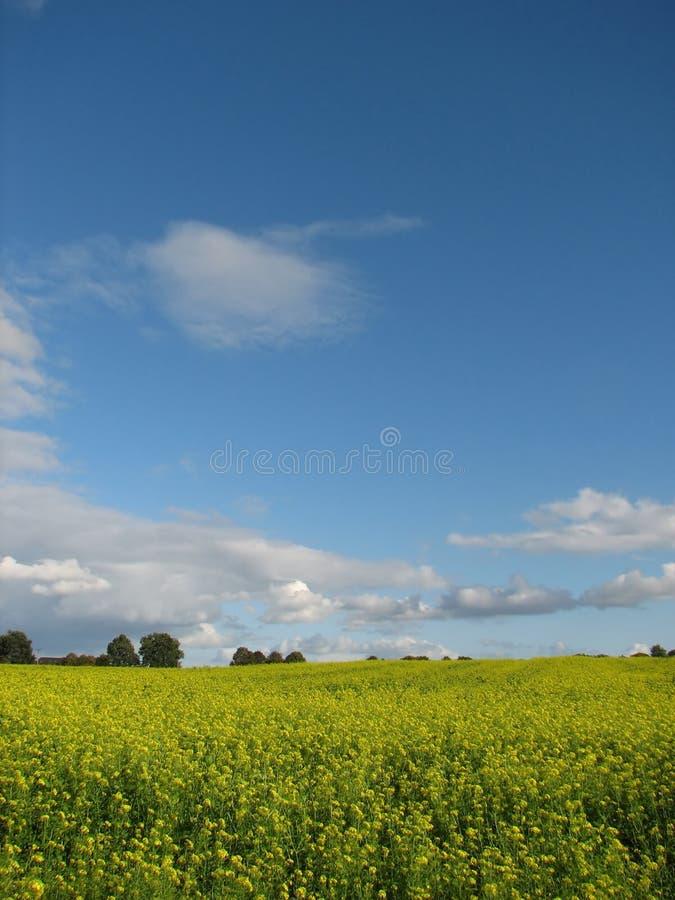 поля земледелия стоковая фотография