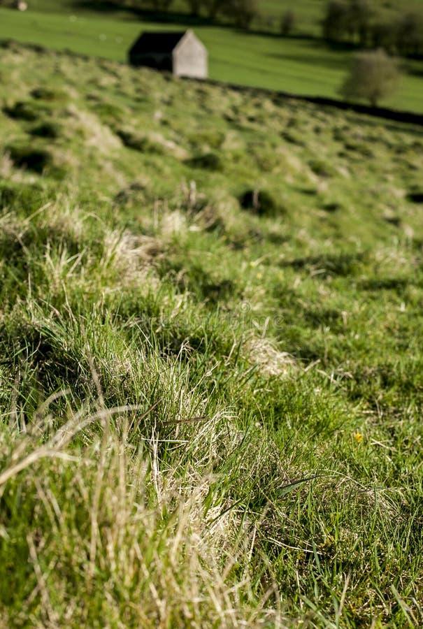 Поля и луга, пиковый район, Великобритания - солнечный день стоковое изображение