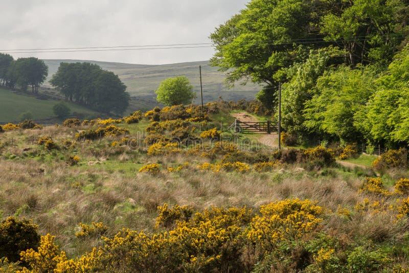 Поля и луга Dartmoor стоковые фотографии rf