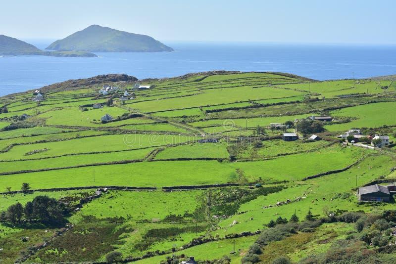 Поля лета зеленые Ирландии стоковые фотографии rf