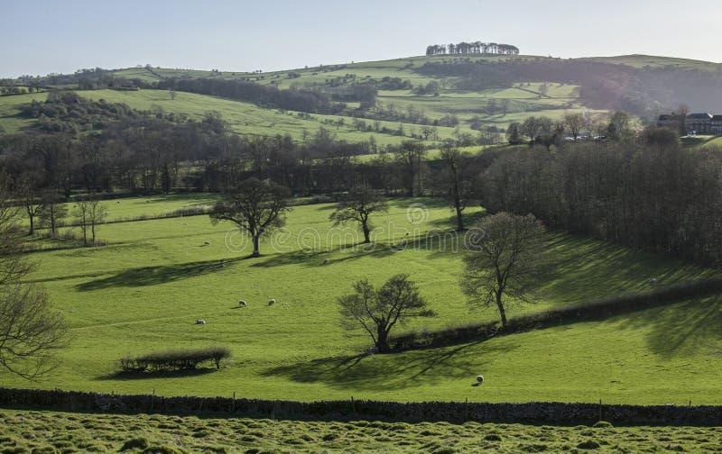 Поля, луга и деревья, пиковый район, Великобритания стоковое фото rf