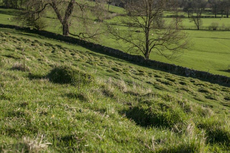 Поля, луга и загородки, зеленый взгляд пикового района, Великобритании стоковые изображения rf