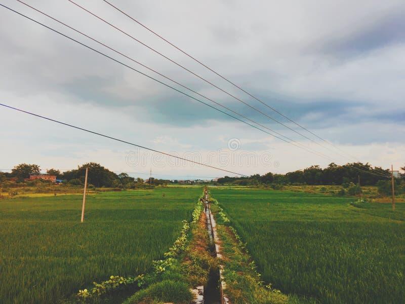 Поля риса в заходящем солнце стоковое изображение