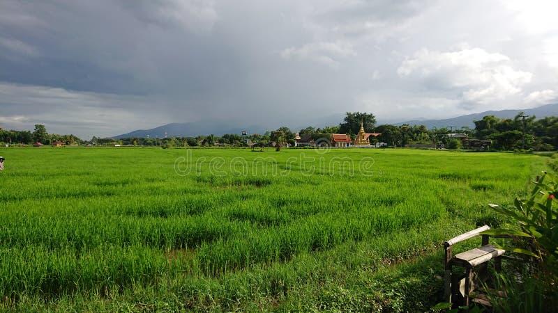 Поля риса в ‹mai†Ching стоковое изображение