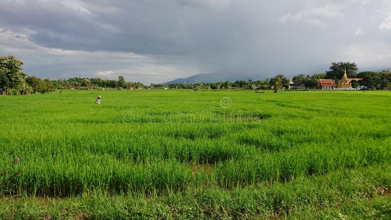 Поля риса в mai Ching стоковая фотография rf