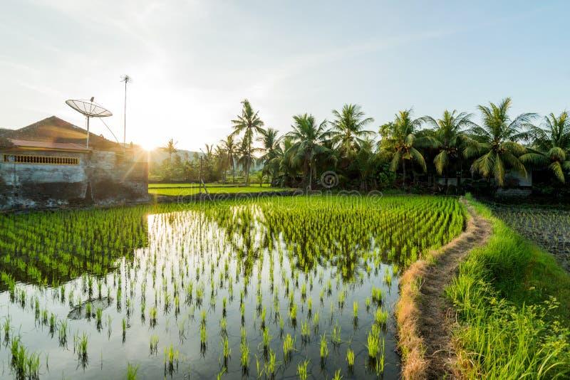 Поля риса обрабатывают землю террасы Азии стоковые фотографии rf