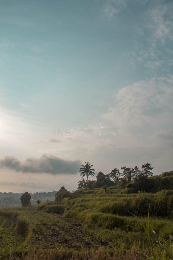 Поля риса Andaleh стоковая фотография rf