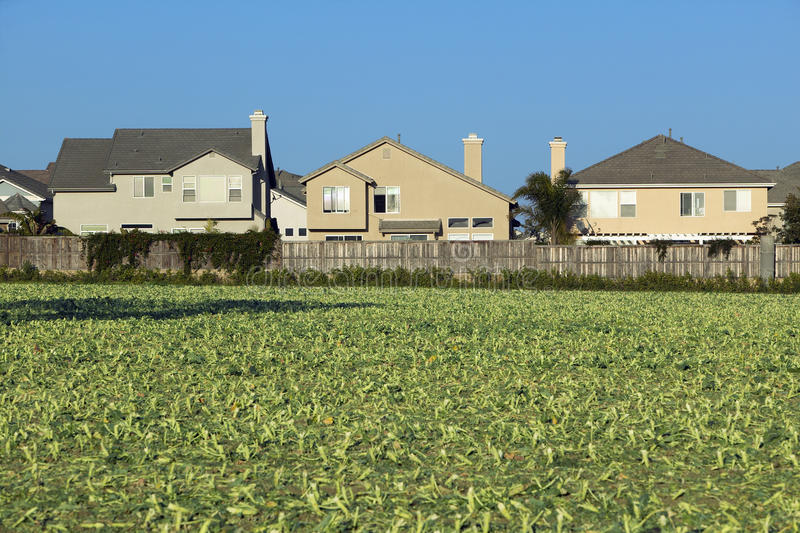 Поля хуторянина с урожаями стоковая фотография rf