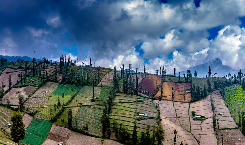 Поля Mt Bromo, Malang, East Java стоковое изображение rf