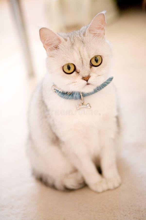 пол кота