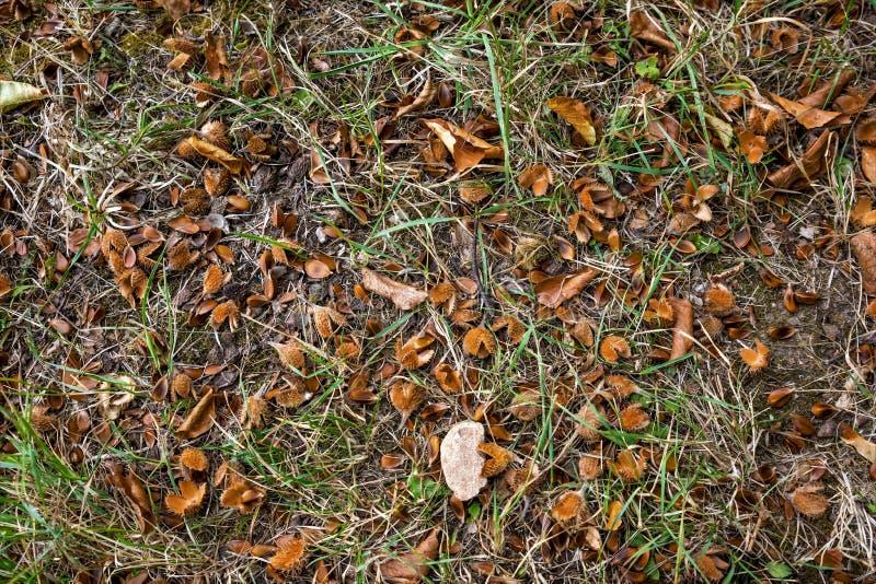 Пол леса с beechnuts, листвой и иглами ели стоковое изображение