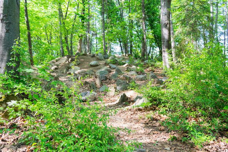 Пол покрытый с большими утесами - время леса наклона весны стоковые фотографии rf