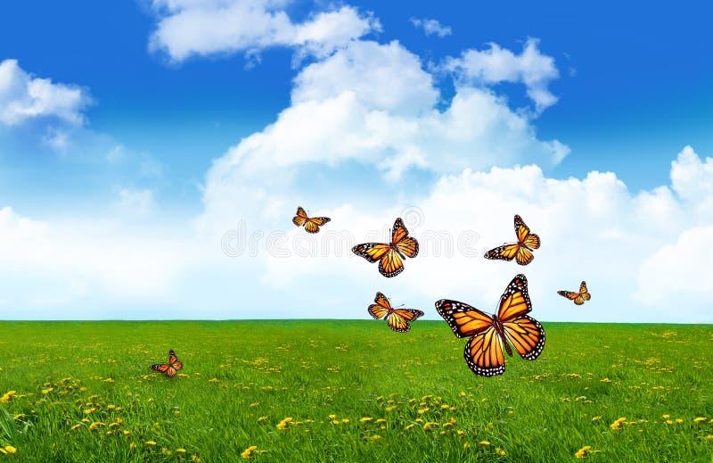 помеец травы поля бабочек стоковые фото