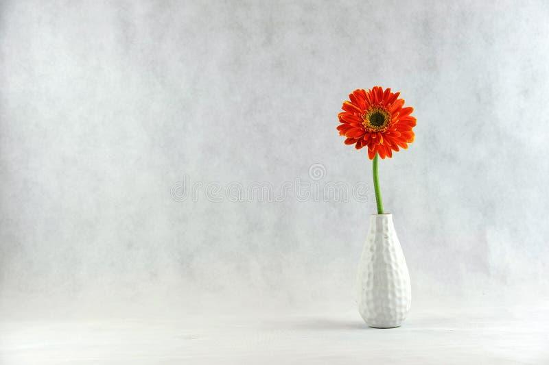 Маргаритка Gerbera в вазе стоковые фотографии rf